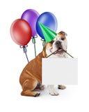 Perro del cumpleaños que lleva a cabo la muestra en blanco con los globos Imagen de archivo
