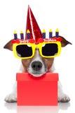 Perro del cumpleaños Fotos de archivo