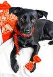 Perro del día de fiesta Fotografía de archivo libre de regalías