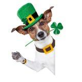 Perro del día de St Patrick Fotografía de archivo libre de regalías