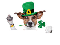 Perro del día de St Patrick Fotografía de archivo