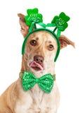 Perro del día de St Patrick que se besa divertido foto de archivo