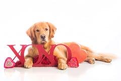 Perro del día de tarjeta del día de San Valentín Foto de archivo libre de regalías