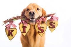 Perro del día de tarjeta del día de San Valentín que lleva a cabo la muestra que dice BESO Foto de archivo libre de regalías
