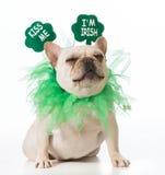 Perro del día del St Patricks Foto de archivo