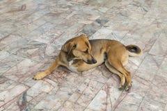 Perro del defecto con tres piernas Fotos de archivo libres de regalías