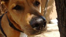 Perro del desierto Fotografía de archivo