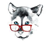 Perro del dibujo de la mano en vidrios rojos imagen de archivo libre de regalías