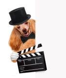 Perro del director del tablero de chapaleta de la película. Imagen de archivo