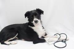 Perro del doctor Fotos de archivo libres de regalías