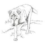 Perro del ejemplo Imágenes de archivo libres de regalías