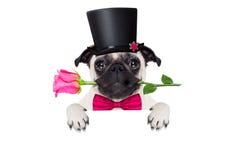 Perro del enfermo del amor de las tarjetas del día de San Valentín Fotos de archivo