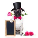 Perro del enfermo del amor de las tarjetas del día de San Valentín Foto de archivo libre de regalías