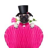 Perro del enfermo del amor de las tarjetas del día de San Valentín Imagen de archivo libre de regalías