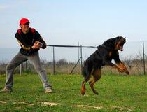 Perro del entrenamiento Imagen de archivo