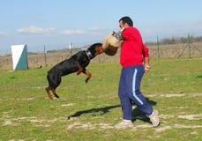 Perro del entrenamiento Fotos de archivo libres de regalías