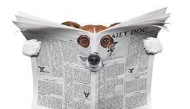 Perro del espía que lee un periódico imagenes de archivo