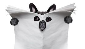 Perro del espía que lee un periódico imágenes de archivo libres de regalías