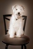 Perro del estudio Fotos de archivo