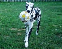 Perro del fútbol Imagenes de archivo