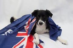 Perro del fútbol con la bandera australiana Imágenes de archivo libres de regalías