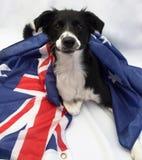 Perro del fútbol con la bandera australiana Fotos de archivo libres de regalías