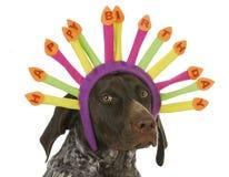 Perro del feliz cumpleaños imagen de archivo libre de regalías