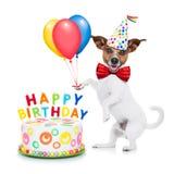 Perro del feliz cumpleaños Fotos de archivo