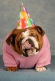 Perro del feliz cumpleaños Fotografía de archivo libre de regalías