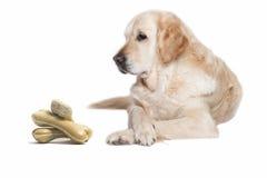 Perro del golden retriever y pila de huesos de perro Fotos de archivo libres de regalías