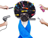 Perro del groomer del peluquero Foto de archivo libre de regalías