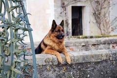 Perro del guarda Foto de archivo