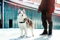 Perro del hombre y del husky siberiano en un paseo en parque moderno en día de invierno soleado imagen de archivo