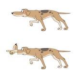 Perro del indicador Foto de archivo libre de regalías
