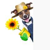 Perro del jardinero Foto de archivo