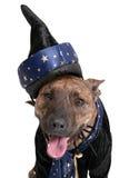Perro del mago Imagenes de archivo