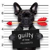 Perro del mugshot de las tarjetas del día de San Valentín fotografía de archivo libre de regalías
