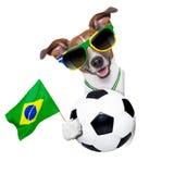 Perro del mundial del Brasil la FIFA Fotos de archivo libres de regalías