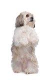 Perro del nacido en el baby-boom Imágenes de archivo libres de regalías