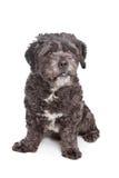 Perro del nacido en el baby-boom Fotos de archivo