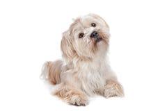 Perro del nacido en el baby-boom Fotografía de archivo libre de regalías
