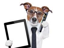 Perro del negocio Fotos de archivo libres de regalías
