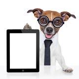 Perro del negocio foto de archivo libre de regalías