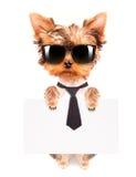 Perro del negocio que sostiene la bandera Imágenes de archivo libres de regalías