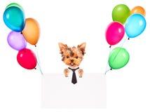 Perro del negocio que sostiene la bandera con los globos Imágenes de archivo libres de regalías