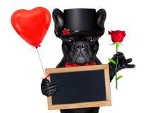 Perro del novio de las tarjetas del día de San Valentín Fotos de archivo libres de regalías