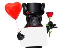 Perro del novio de las tarjetas del día de San Valentín Imágenes de archivo libres de regalías