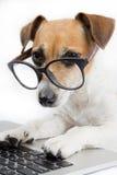 Perro del ordenador Fotografía de archivo libre de regalías