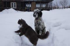 Perro del organismo inglés que juega con el gato en nieve imagen de archivo libre de regalías