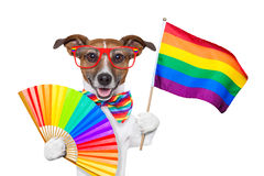 Perro del orgullo gay imagen de archivo libre de regalías
